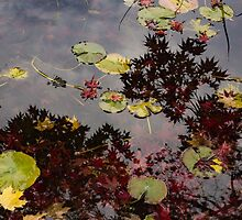 Fall Pond Reflections - a Story of Waterlilies and Japanese Maple Trees - Take Two by Georgia Mizuleva