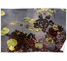 Fall Pond Reflections - a Story of Waterlilies and Japanese Maple Trees - Take Two Poster