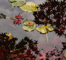 Fall Pond Reflections - a Story of Waterlilies and Japanese Maple Trees - Take Two Sticker