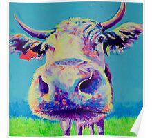 Alberta Cow Poster
