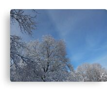 Snow Covered Morning (6816) Metal Print