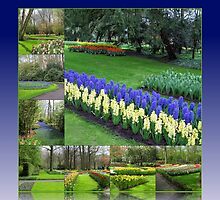Keukenhof Hyacinths and Tulips Collage by MidnightMelody