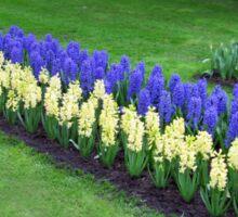 Keukenhof Hyacinths and Tulips Collage Sticker