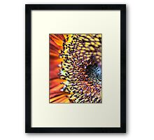 A Sunflower Set ( 7 ) All of the babies being snug. Framed Print