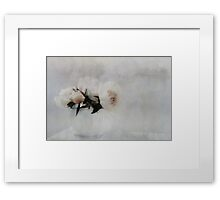 A Portrait of Peonies Framed Print