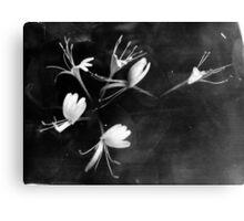 Honeysuckle Canvas Print