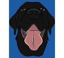 Happy Black Lab Photographic Print