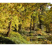 Fall Color Photographic Print