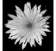 Black and White Flower Photographic Print