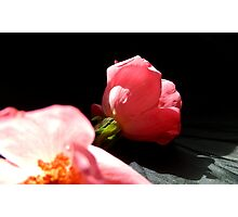 PETALS OF PINK Photographic Print