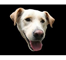 An Example of a Good Dog Photographic Print