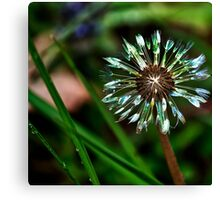 Dandelion Will Make You Wise Canvas Print