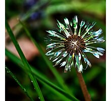Dandelion Will Make You Wise Photographic Print