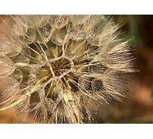 Abstract Dandelion  Photographic Print