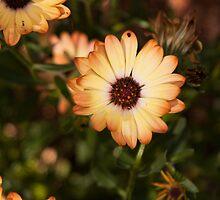 In a Daisy Garden by jayneeldred
