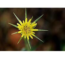 Star Flower Photographic Print