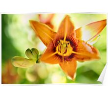 Day Lily Abstract Poster