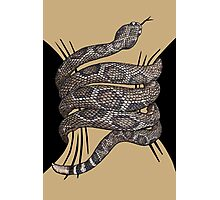 Rattlesnake Squeeze Photographic Print