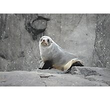 Wink Seal ;) Photographic Print