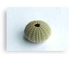 Sea Urchin Shell Metal Print