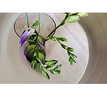 purple freesia buds Photographic Print