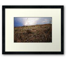 Box Turtle in the Nebraska Sandhills Framed Print