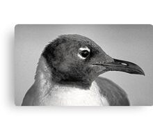 Laughing Gull One  Canvas Print
