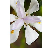Beetle on Flower.  Photographic Print