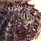 Purple Urchin by Aileen David