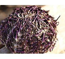 Purple Urchin Photographic Print