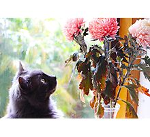 Gazing at the Flowers.  Photographic Print