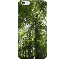 Looking up into the Trees iPhone Case/Skin
