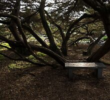 Silver Bench - Sit for a Spell and Enjoy the Peace and Quiet by Georgia Mizuleva