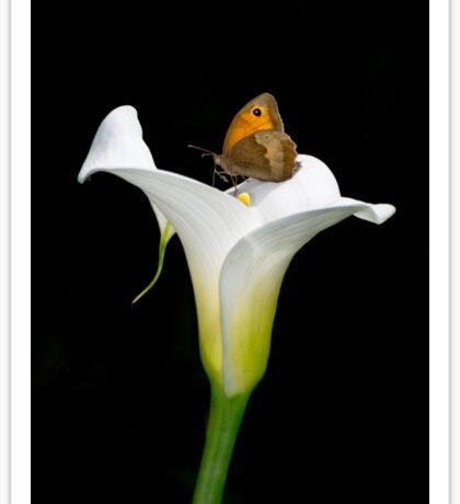 butterfly on a lily flower Sticker