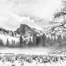 Yosemite from the meadow by Gavin Poh