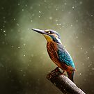Kingfisher by Helmar Designs