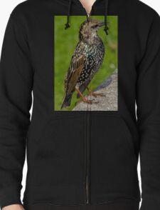 Starling T-Shirt