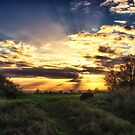 Last Light by Vicki Field
