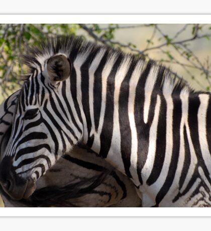 Zebra KwaZulu-Natal South Africa Sticker
