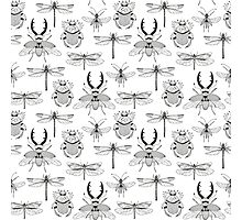 seamless pattern with various hand drawn insects Photographic Print