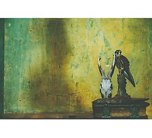 Shelf and Shadow Photographic Print