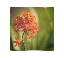 Crucifix Orchid Epidendrum ibaguense square format Scarf