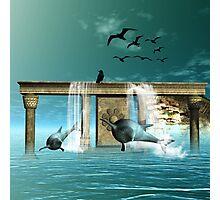 Wonderful dolphins Photographic Print