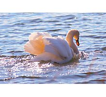 Going Gracefully Photographic Print