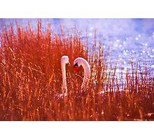 Behind The Reeds Photographic Print