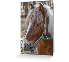 Horse Head close-up Greeting Card
