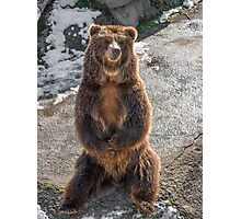 Brown  grizzly bear on a rock Photographic Print