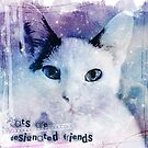 Cats are designated friends by bsilvia