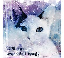 Cats are designated friends Photographic Print