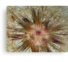 Blue-spotted Sea Urchin Canvas Print